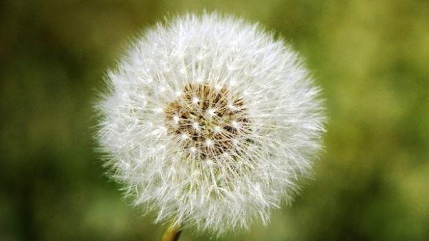Polline allergia